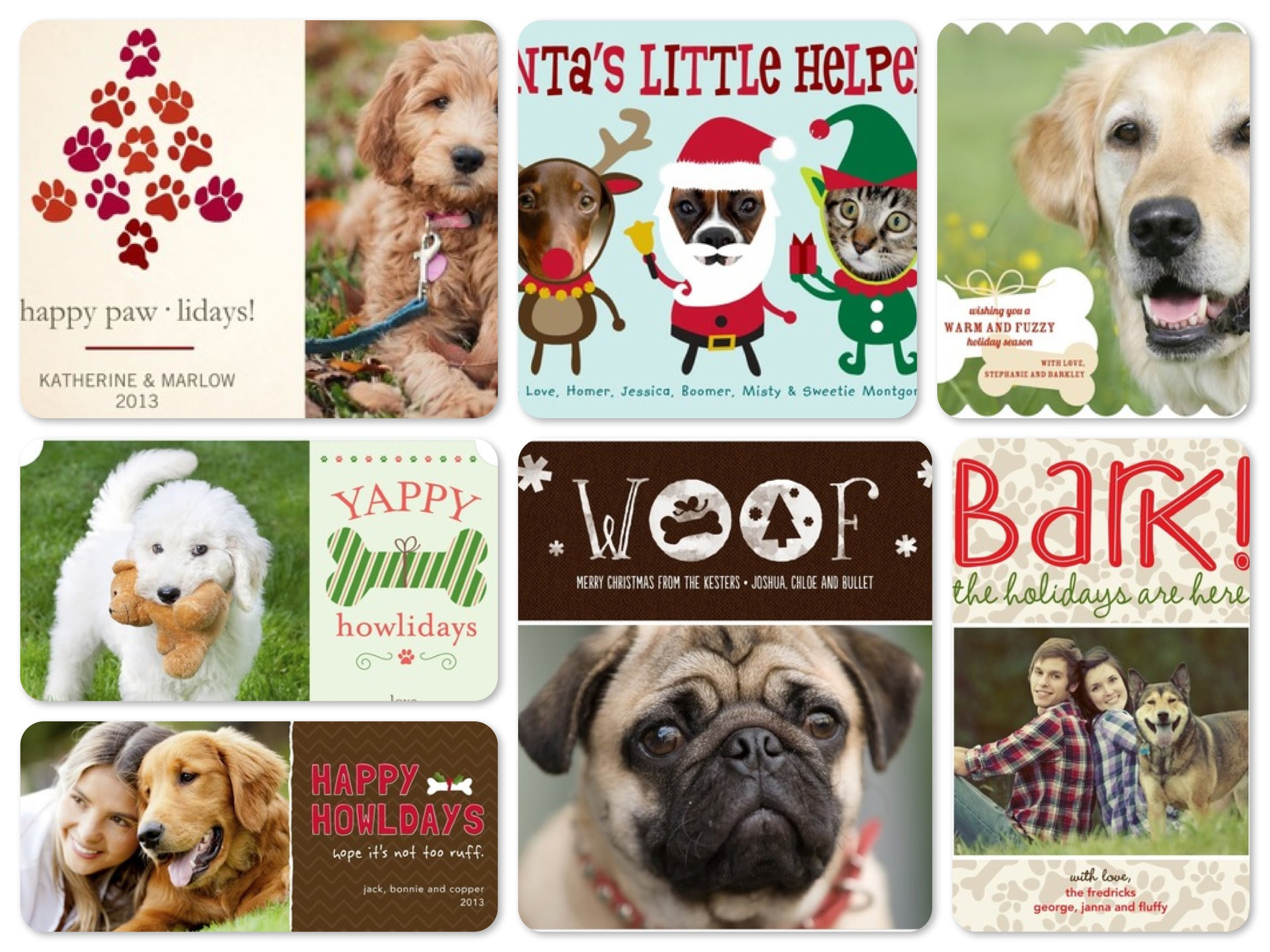 Christmas Card Pet Photo Ideas Pet S Gallery