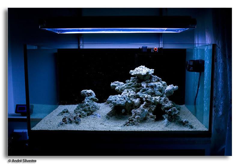 Aquascape Ideas Reef Aquascape Styles