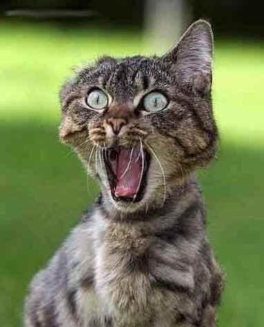 terrified_cat.jpg (89101 bytes)