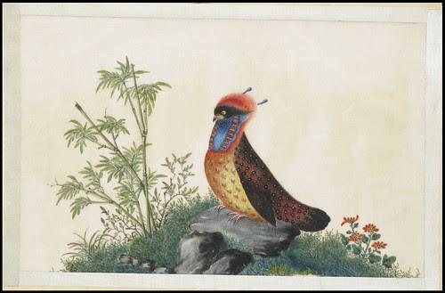 Bird Album e