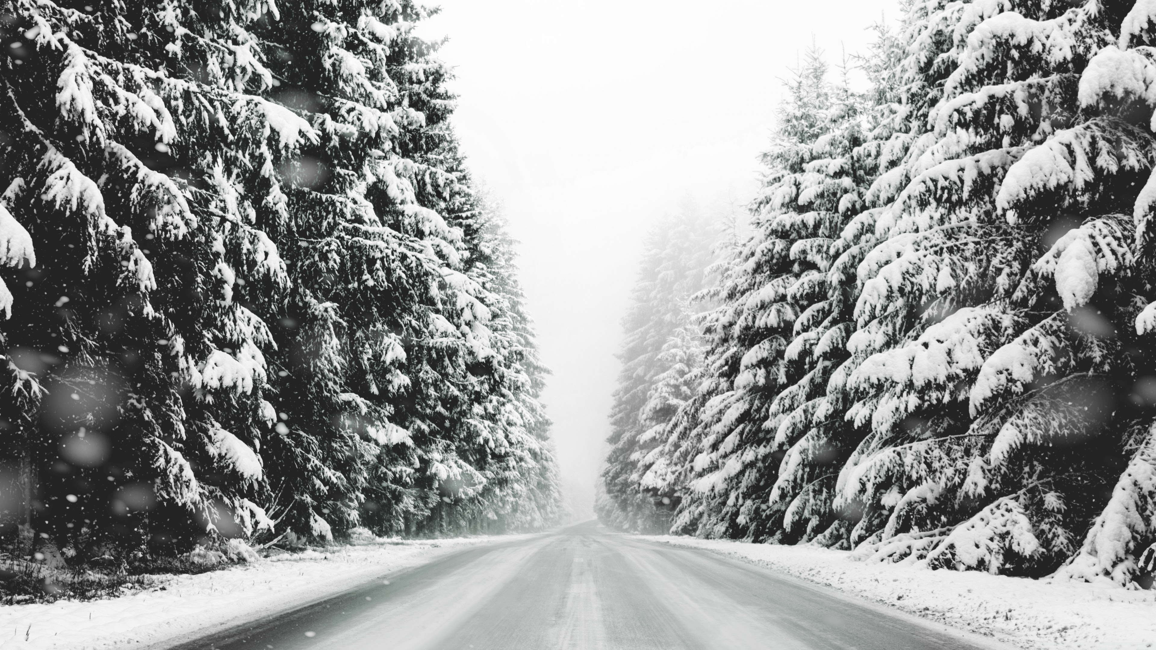 Road Forest Snow Winter Landscape Black And White Ultra Hd
