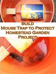Mouse Trap   no kill. Easy to make, but watch til the end for the final version!   Oh! Well