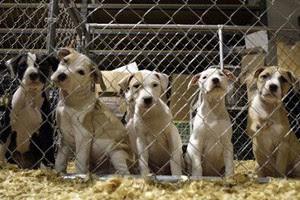 Жестокое обращение с собаками в Украине может послужить причиной отмены Евро-2012