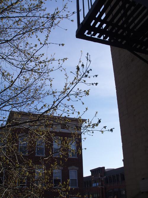 budding tree among buildings