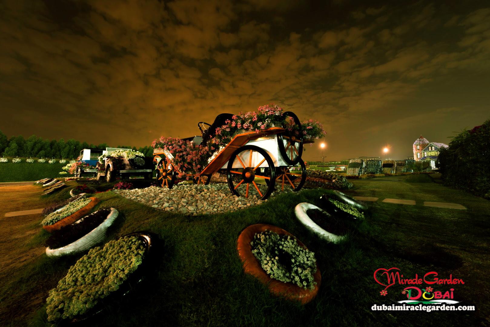 Dubai Miracle Garden 11