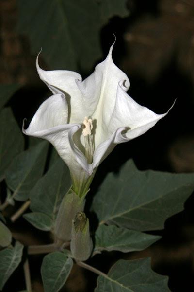 flower_open