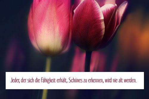 Goethe Zitate Geburtstag Das Leben Zitate