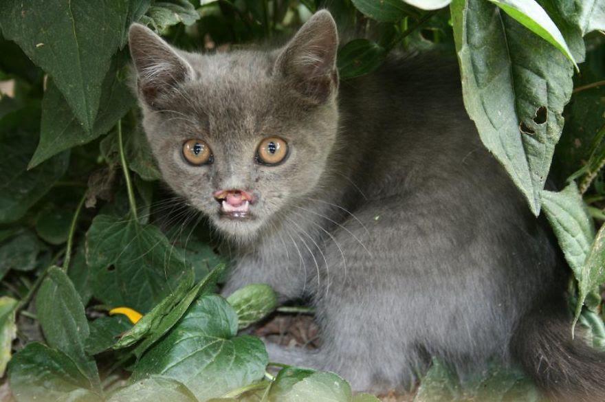 Lazarus, The Rescued Vampire Cat