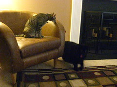Maggie and Huggy Bear investigate the new chair
