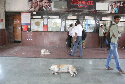 The Railway Stations Of Mumbai Have Gone To The Dogs by firoze shakir photographerno1