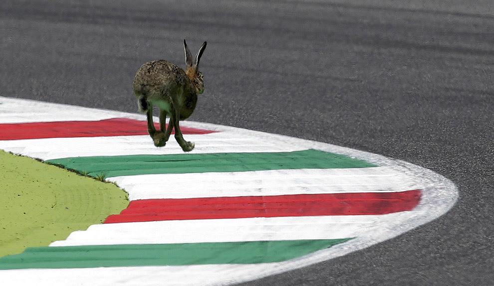 Кролик на трассе Муджелло, Италия