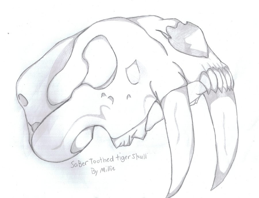 Saber Tooth Tiger Drawing At Getdrawingscom Free For Personal Use