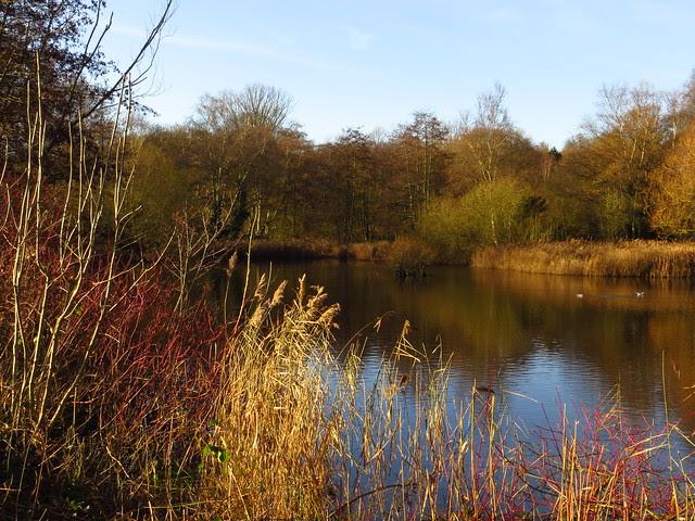 The Bird Sanctuary Pond