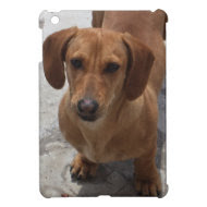 Tan Dachshund iPad Mini Case