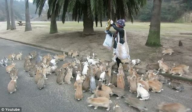 Stampeding rabbits: Bunnies swarmed around this tourist after she offered them food