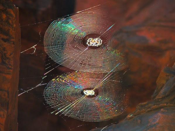 perierga.gr - 10 εντυπωσιακά παραδείγματα συμμετρίας στη φύση!