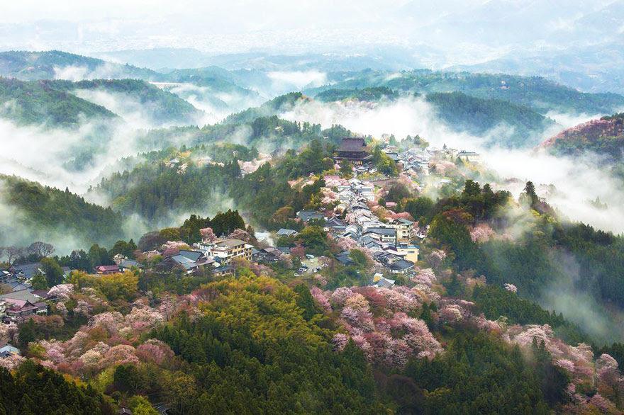 primavera-flores-cerezo-sakura-japon-national-geographic (16)