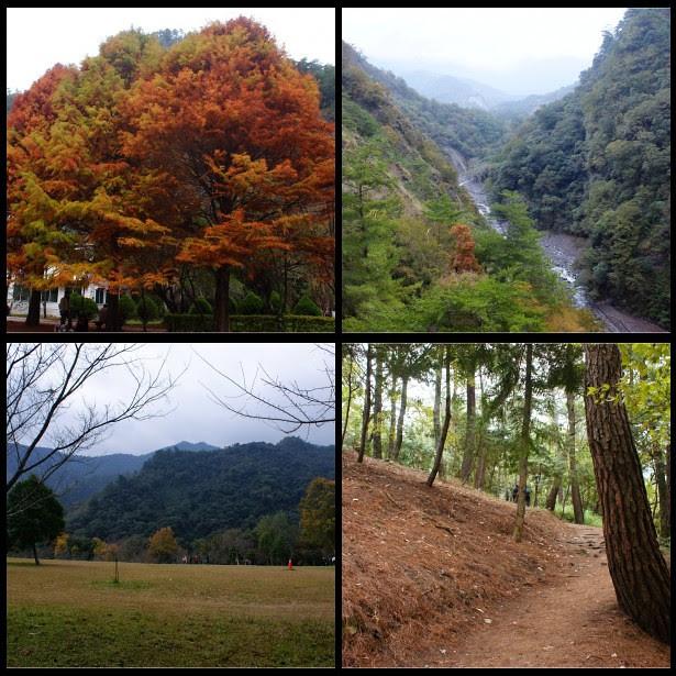 仁愛之美~【南投仁愛】奧萬大國家森林遊樂區