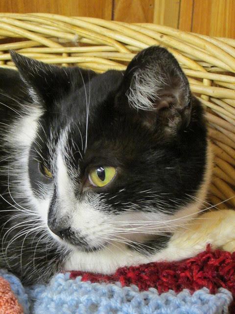 Elsie - a teensy purr - eventually!