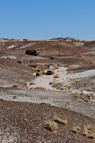 Petrified Forest AZ 16Mar2012 a_6533 by 2HPix.com - Henry Huey