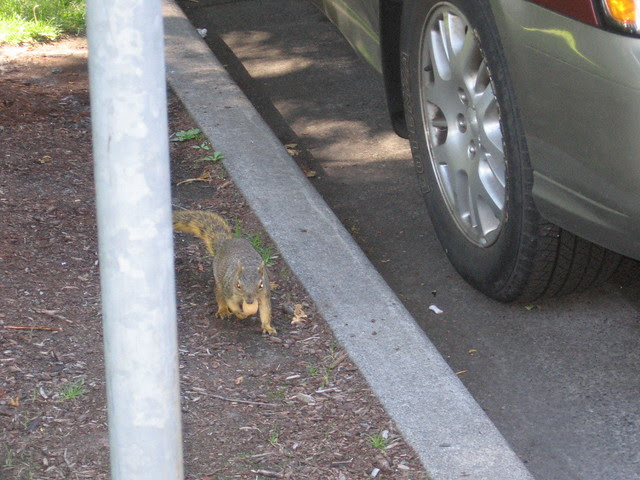 squirrel_with_nut