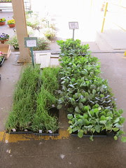 Veggies for the Garden