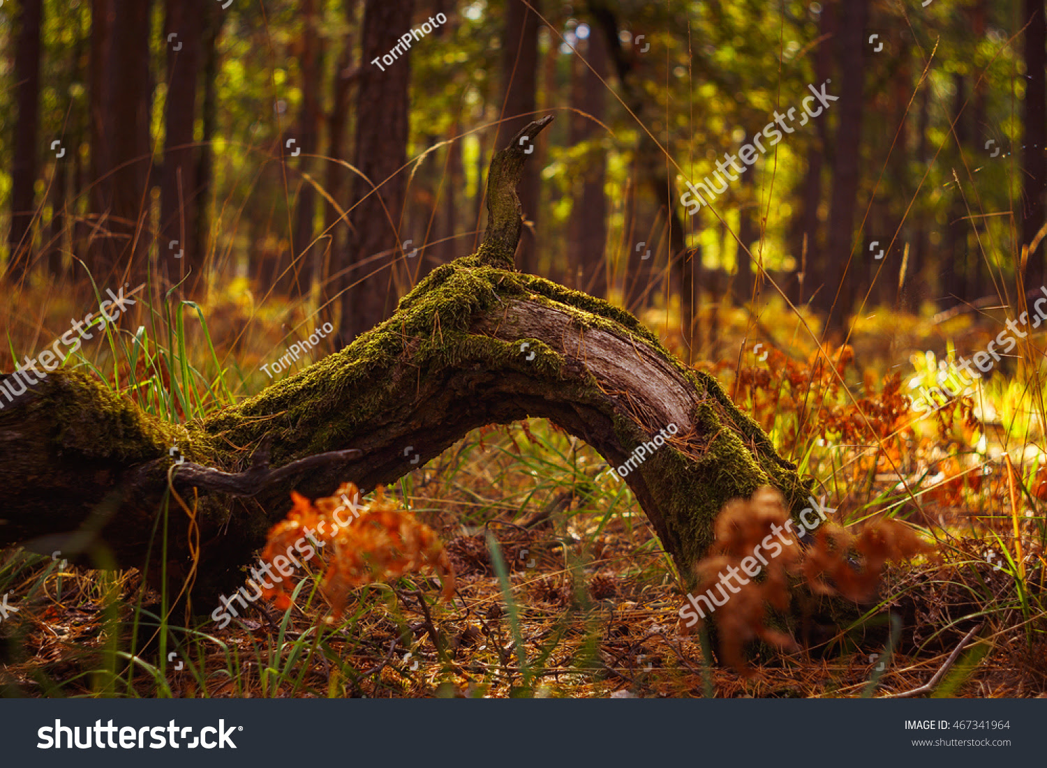 Golden autumn forest landscape with mossy tree trunk