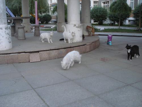 Cats in Shenyang, China _ 0143