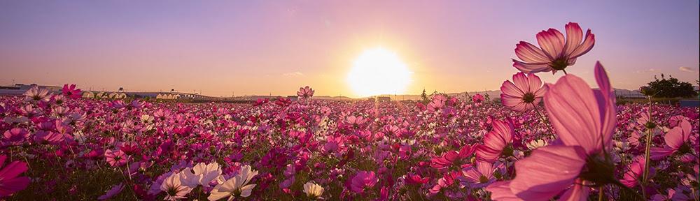 Portadas Brahma Flores Voz De Paz