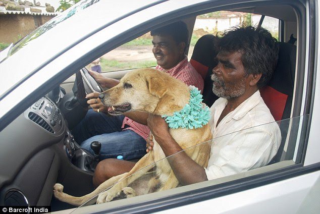 VIP: The bride's father  carries Sheru in his friend's car on the wedding day