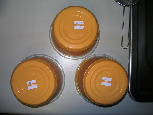 QFC Nacho Cheese Trio Bottom