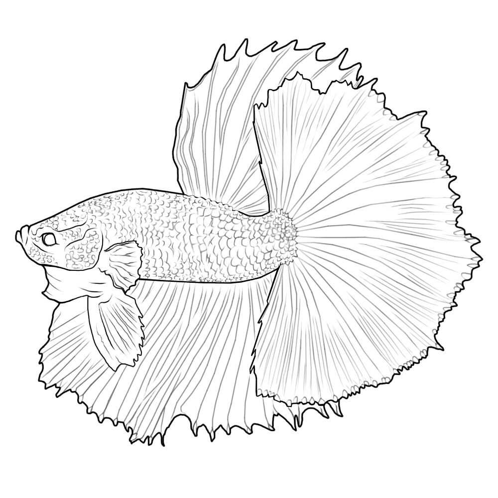 Digital Betta Painting and Free Lines - Betta Fish and ...