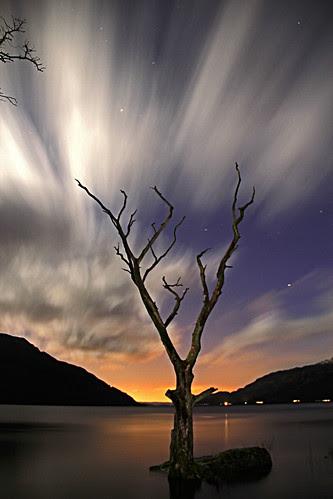 The Tree, Tarbet by Paul Killen 17
