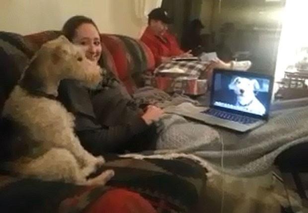 Vídeomostra o encontro de dois cães pelo Skype (Foto: Reprodução)
