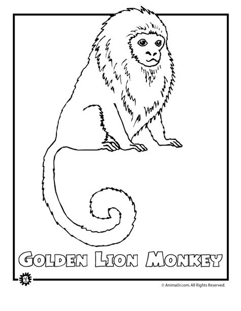 rainforest coloring sheets coloring pages  print