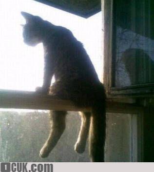 Download 101+  Gambar Kucing Galau Paling Baru HD