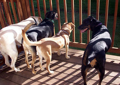 4Dogs_6809