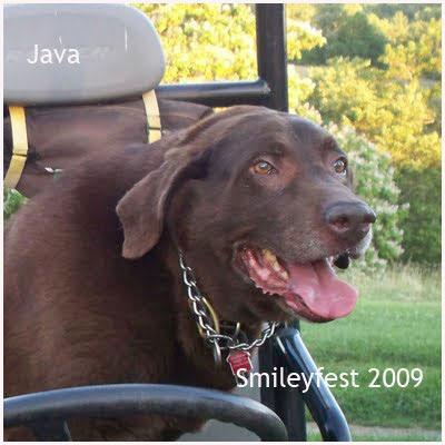 10-Java----2