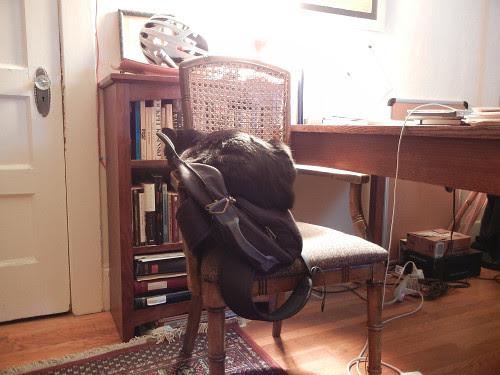 Cat on Bag 0551