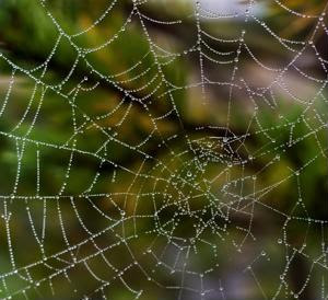 Scrutinizing the spider web structure of strategic sourcing