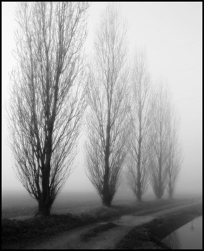 Prima nebbia mattutina - Lungo canale Muzza (Paullo) Italy