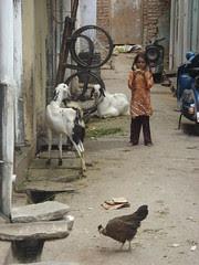 udaipur alley