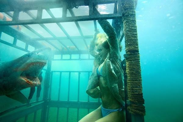 1060+ Gambar Ikan Hiu Melompat Terbaik