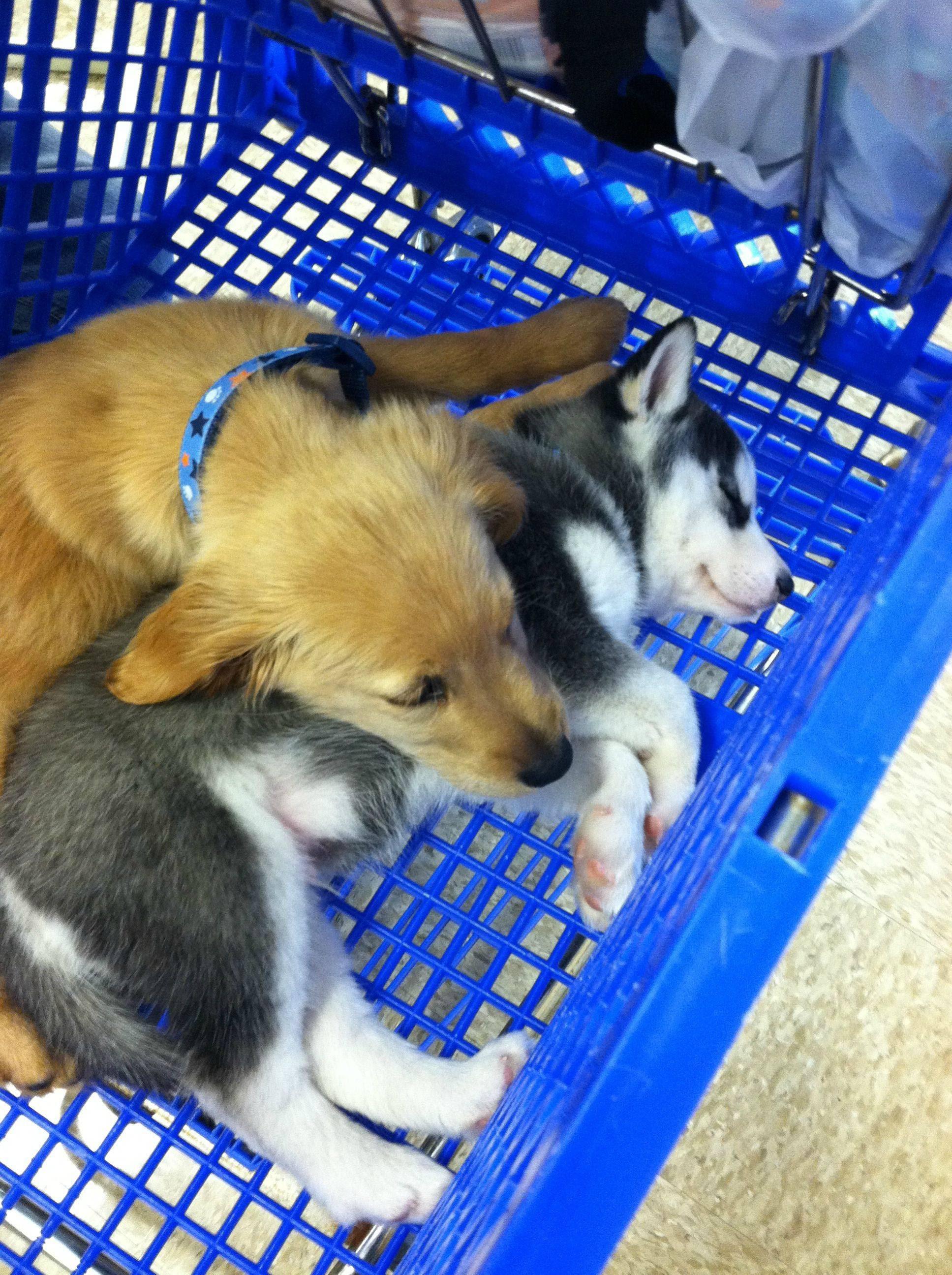 dois cachorros dormem agarrados