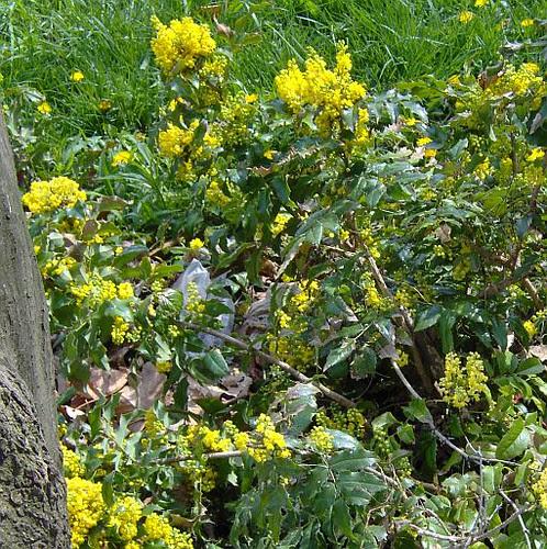 yellowflowerthings