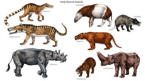 Image Gallery dinosaurs animals