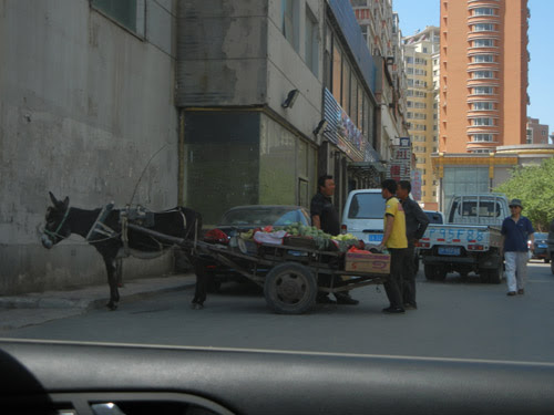 Fruit Vendor and His Donkey, Shenyang, China _ 0372