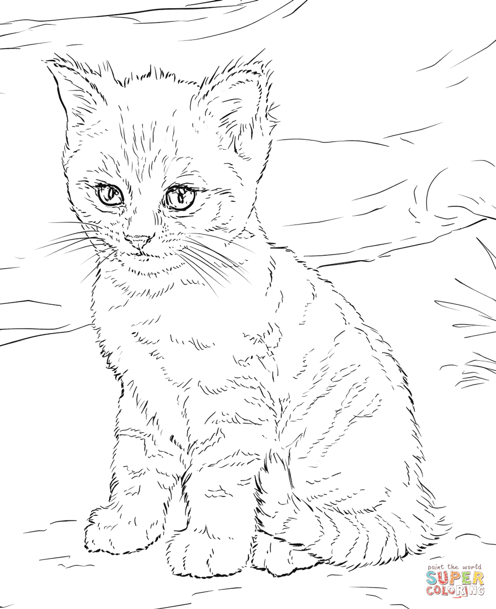 65 Top Coloring Pages Of Calico Cats For Free