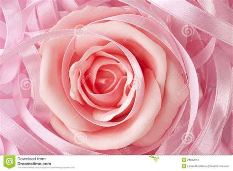 Pink Rose Wedding Background Stock Image   Image of