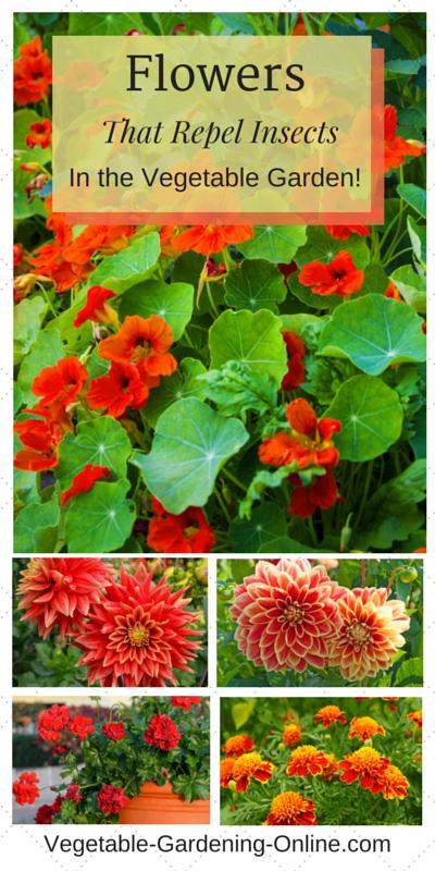 aaa companion flowers2